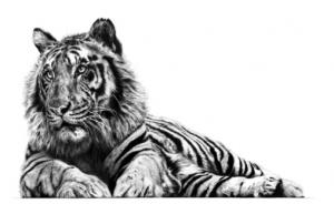 Jungle Lord