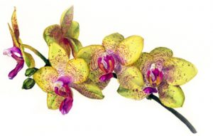 Glos. Society for Botanical Illustration @ Nature in Art Education Centre