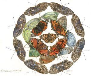 cath-hodsman-butterflys