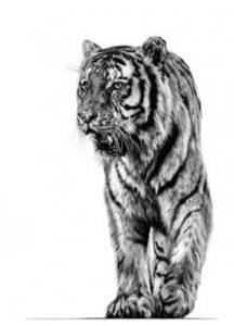 jamie-boots-tiger