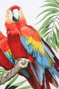 jonathan-newey-parrot