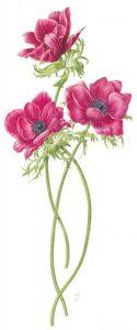 pinkanenomes-w750h750