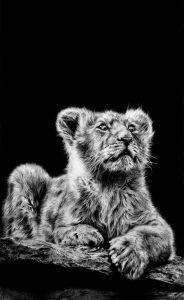 Boots Lion