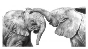 How to Draw an Elephant in Graphite Pencil - Jamie Boots @ Nature in Art