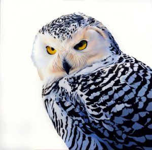 Painting Wildlife in Acrylics - Kim Thompson @ Nature in Art