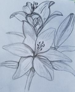 """""""Lilies"""" by Catherine"""