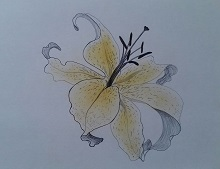 """""""Consider the Lily"""" by Linda B."""