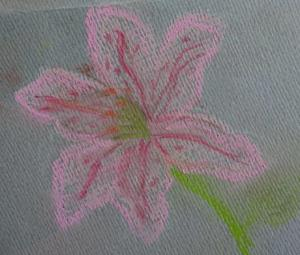 """""""Pink Lily"""" by Pandy"""