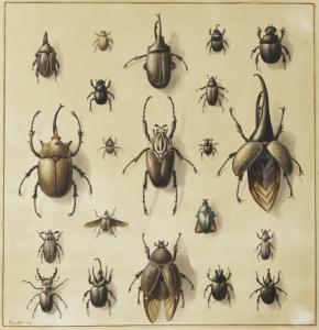 Sarah Stone (1760-1844) (British).  Beetles. Watercolour.