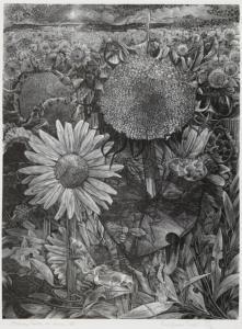 George Tute (British). Sunflower Fields. Wood engraving.