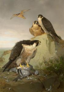 Joseph Wolf (1820-1899) (Germany). Peregrines. Oil