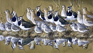 Charles Tunnicliffe (1901-1979) (British). Green, Gold and Dunn. Watercolour and gouche.